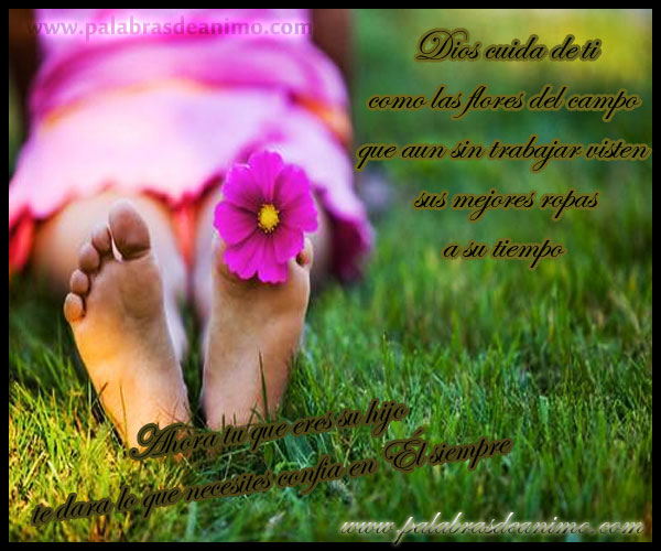 Dios-cuida-de-ti-como-las-flores-del-campo