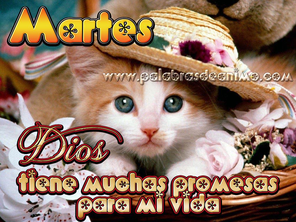 Martes-Dios-tiene-muchas-promesas-para-mi-vida